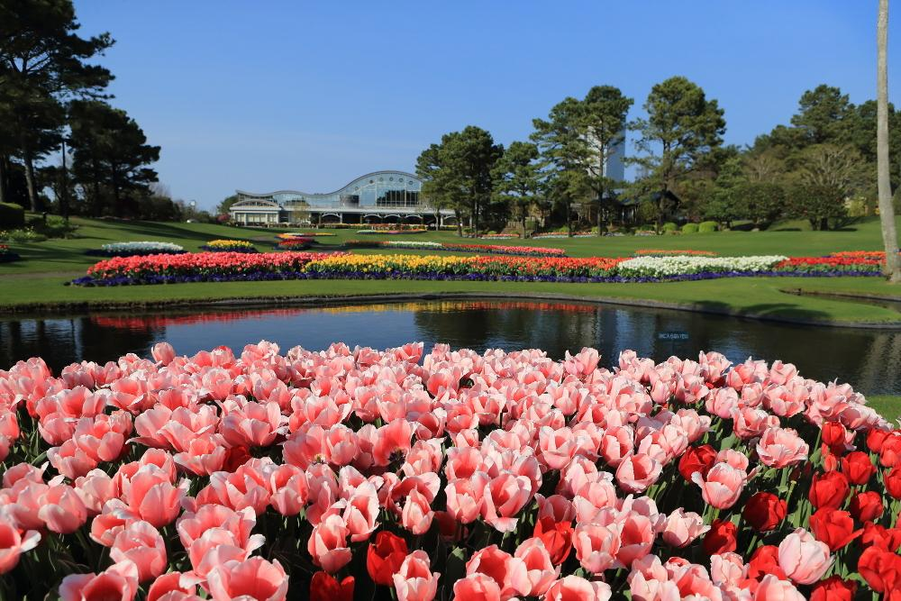 ミヤザキ春の花まつり