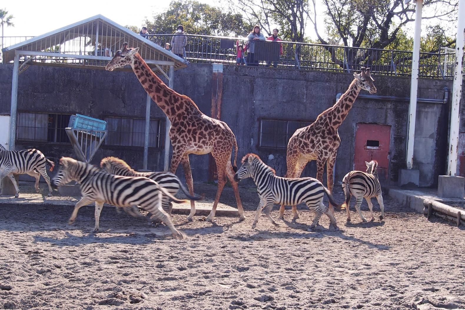 宮崎市フェニックス自然動物園-1