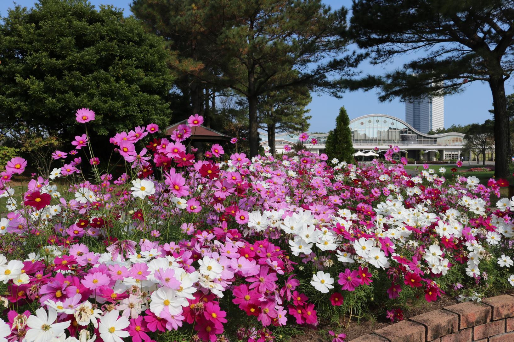 Florante Miyazaki-2