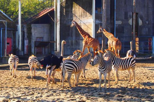凤凰自然动物园-3