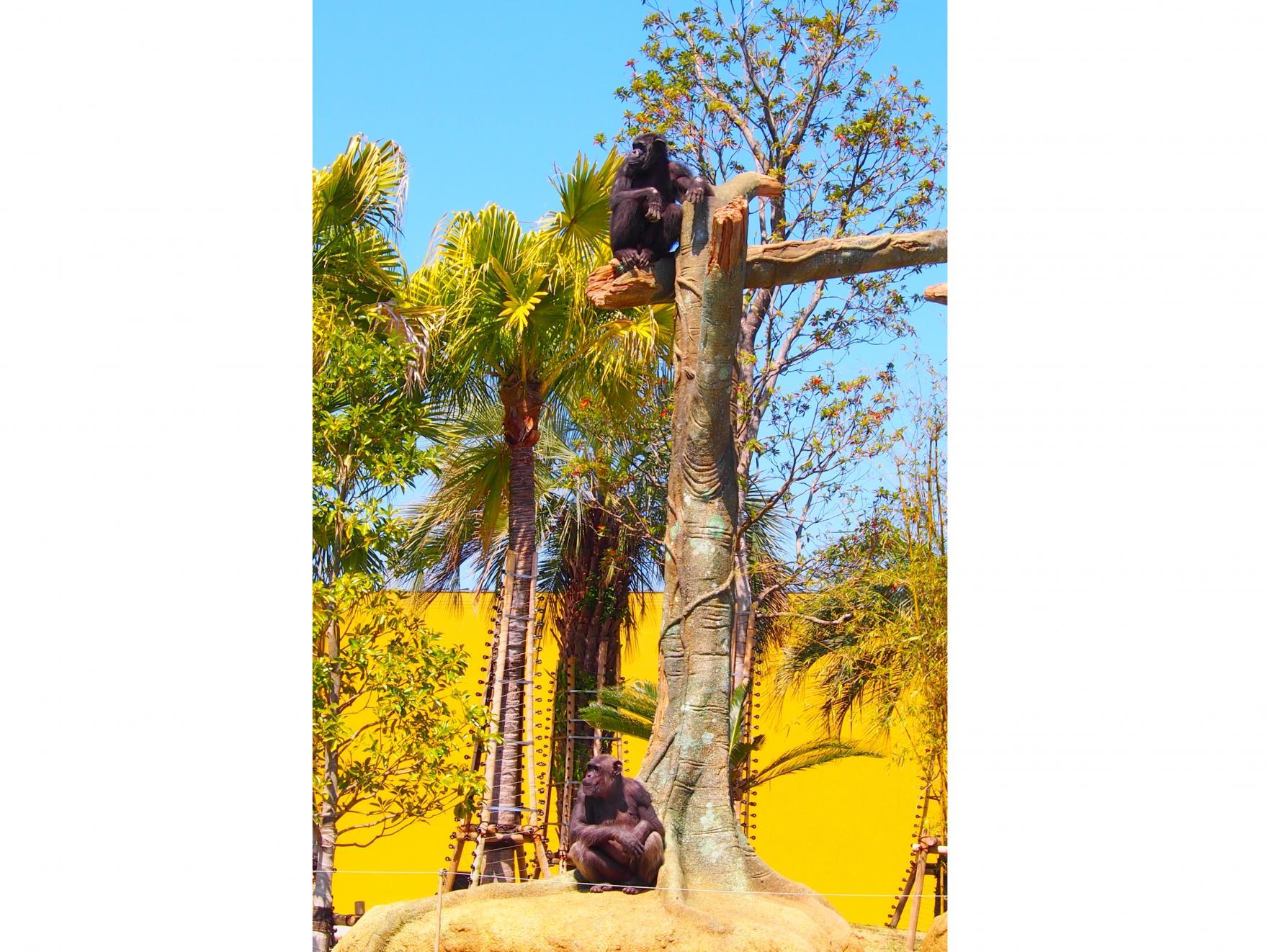 凤凰自然动物园-2