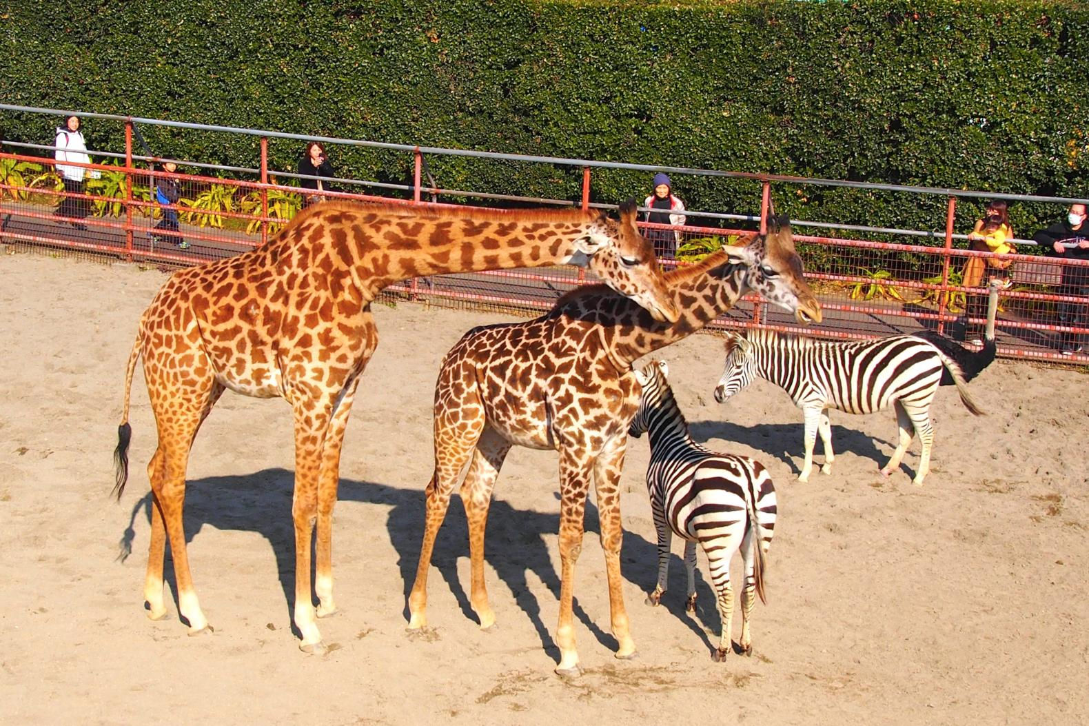 피닉스 자연 동물원-1