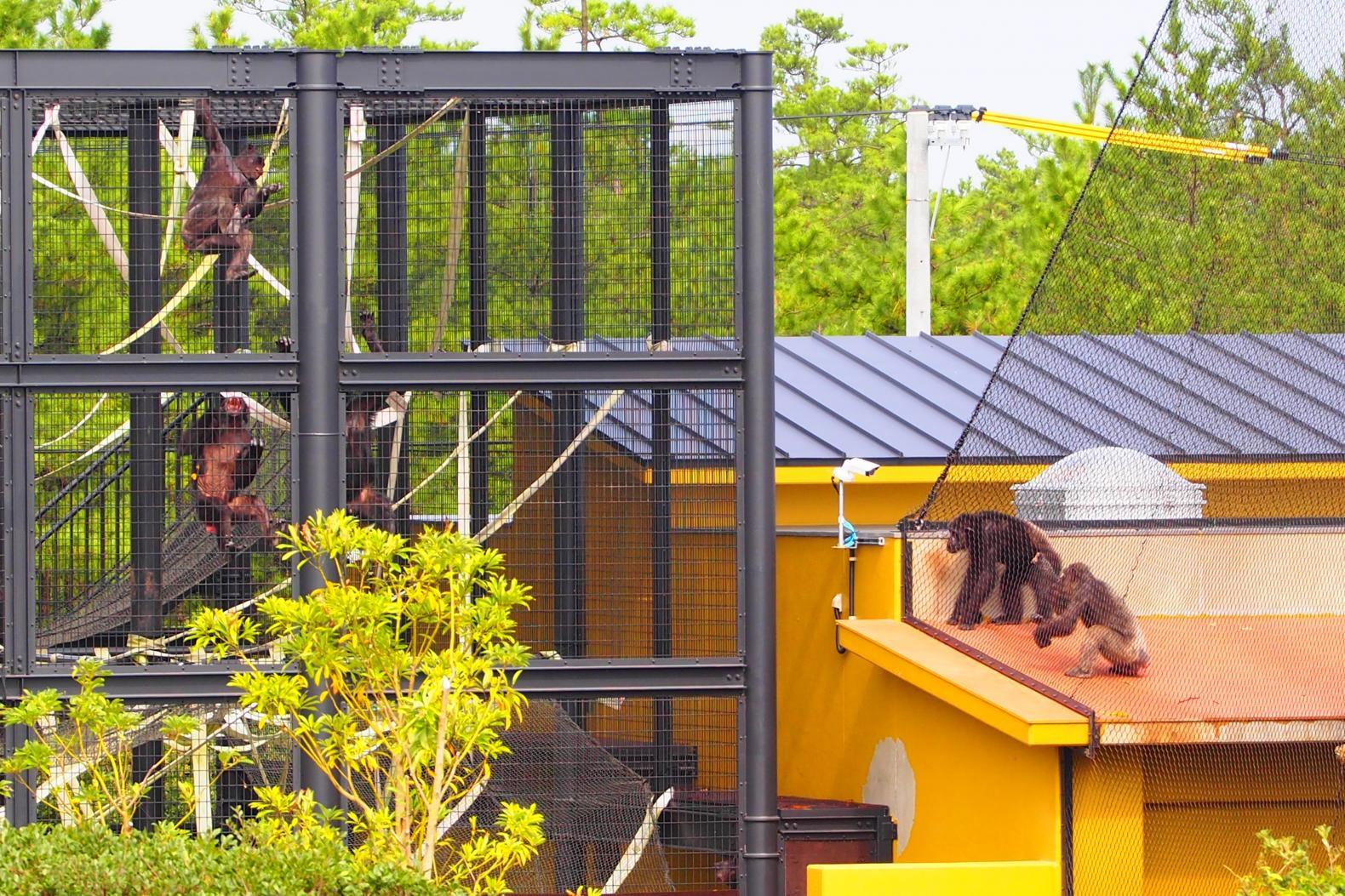 凤凰自然动物园-5