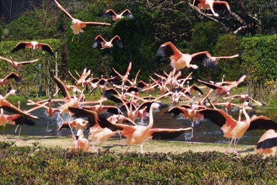 凤凰自然动物园-4