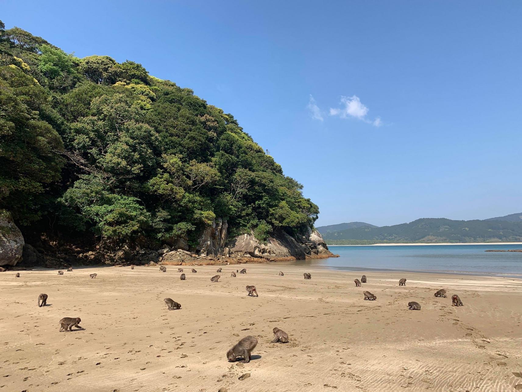幸島(串間市)-1