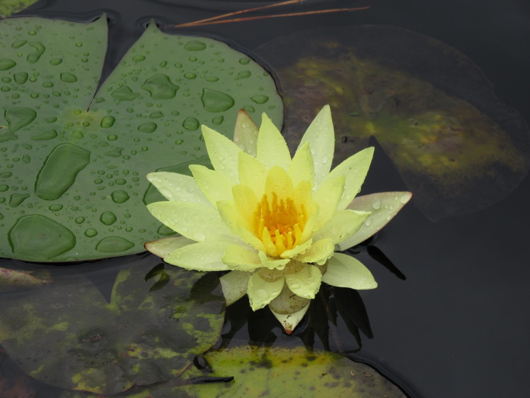 春の一ツ葉神話と花めぐり2021-1