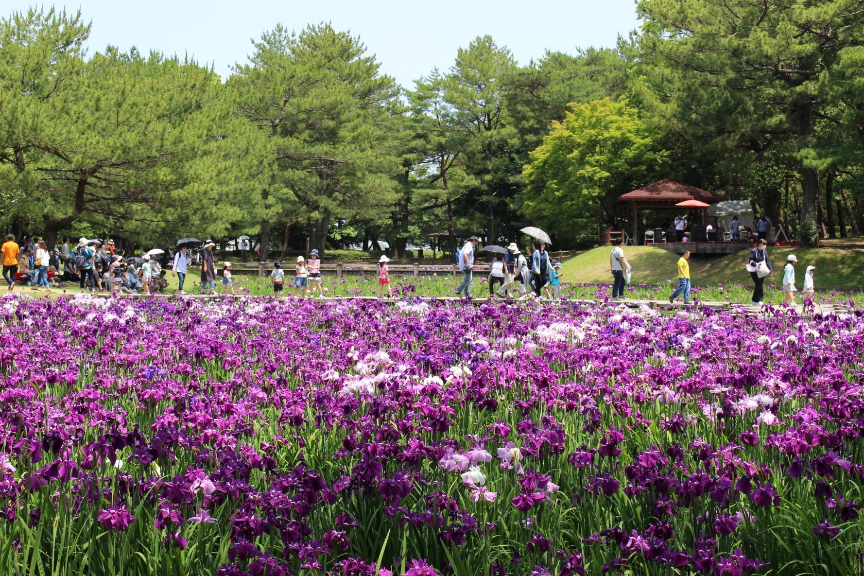 春の一ツ葉神話と花めぐり2021-2