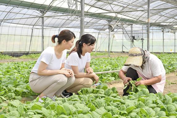 ハウス農業体験-1