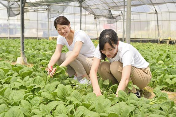 ハウス農業体験-3