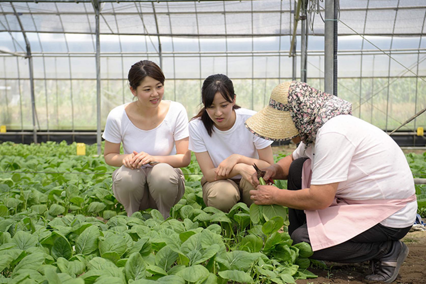 ハウス農業体験-2