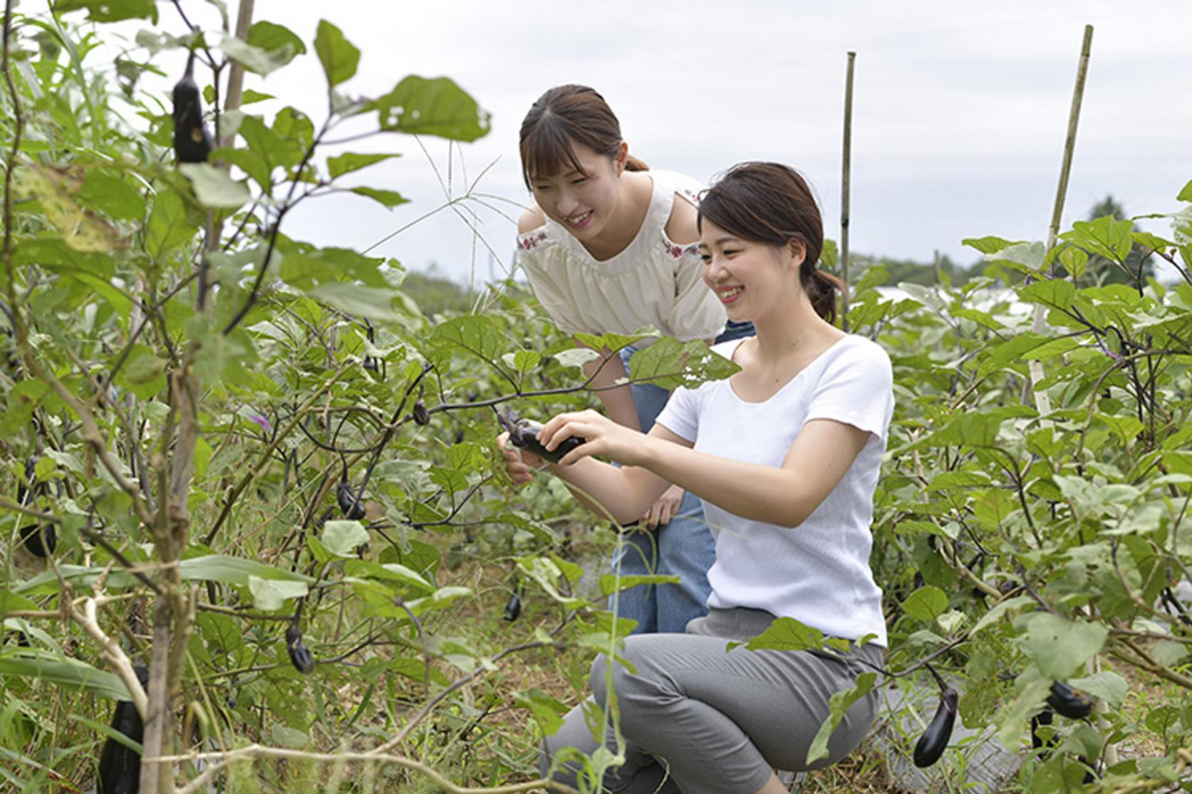 無農薬農業体験(全日コース)-3