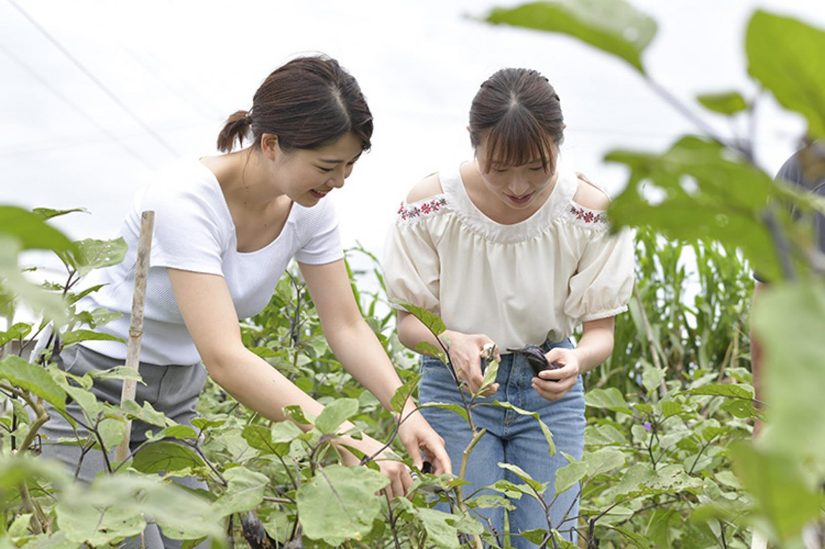 無農薬農業体験(全日コース)-2