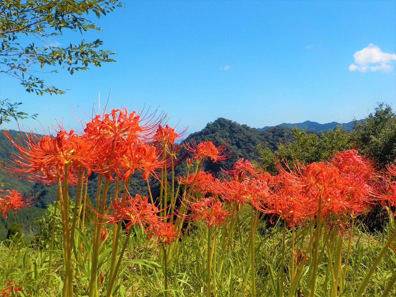 椿山森林公園-4
