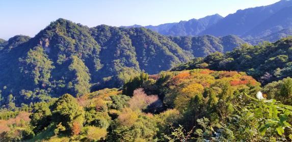 椿山森林公園-0
