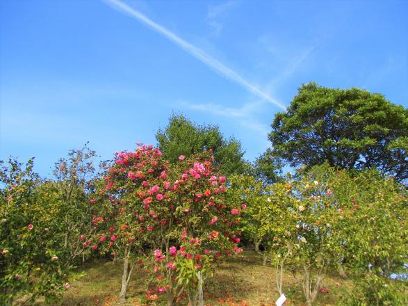椿山森林公園-2