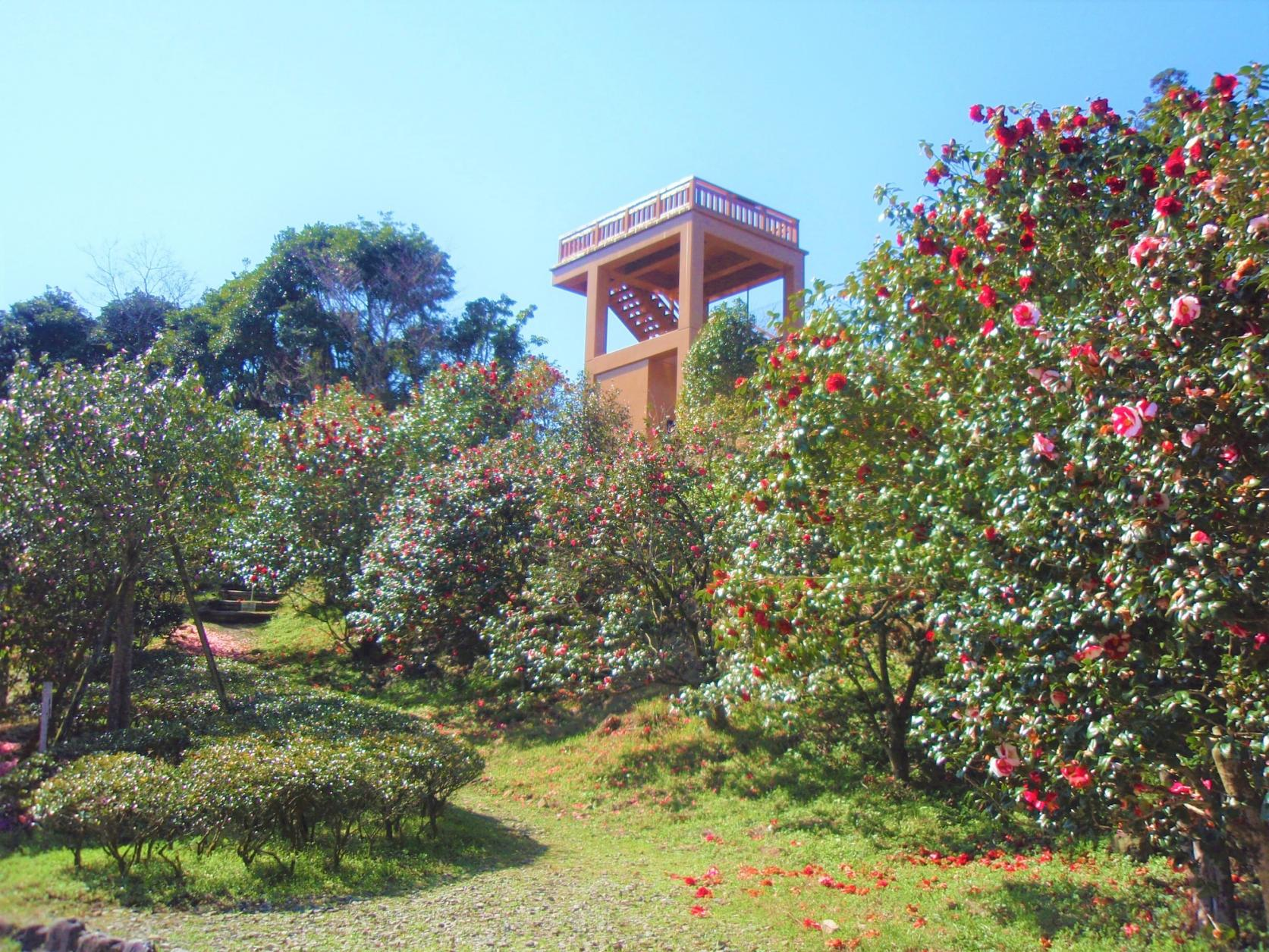 椿山森林公園-1