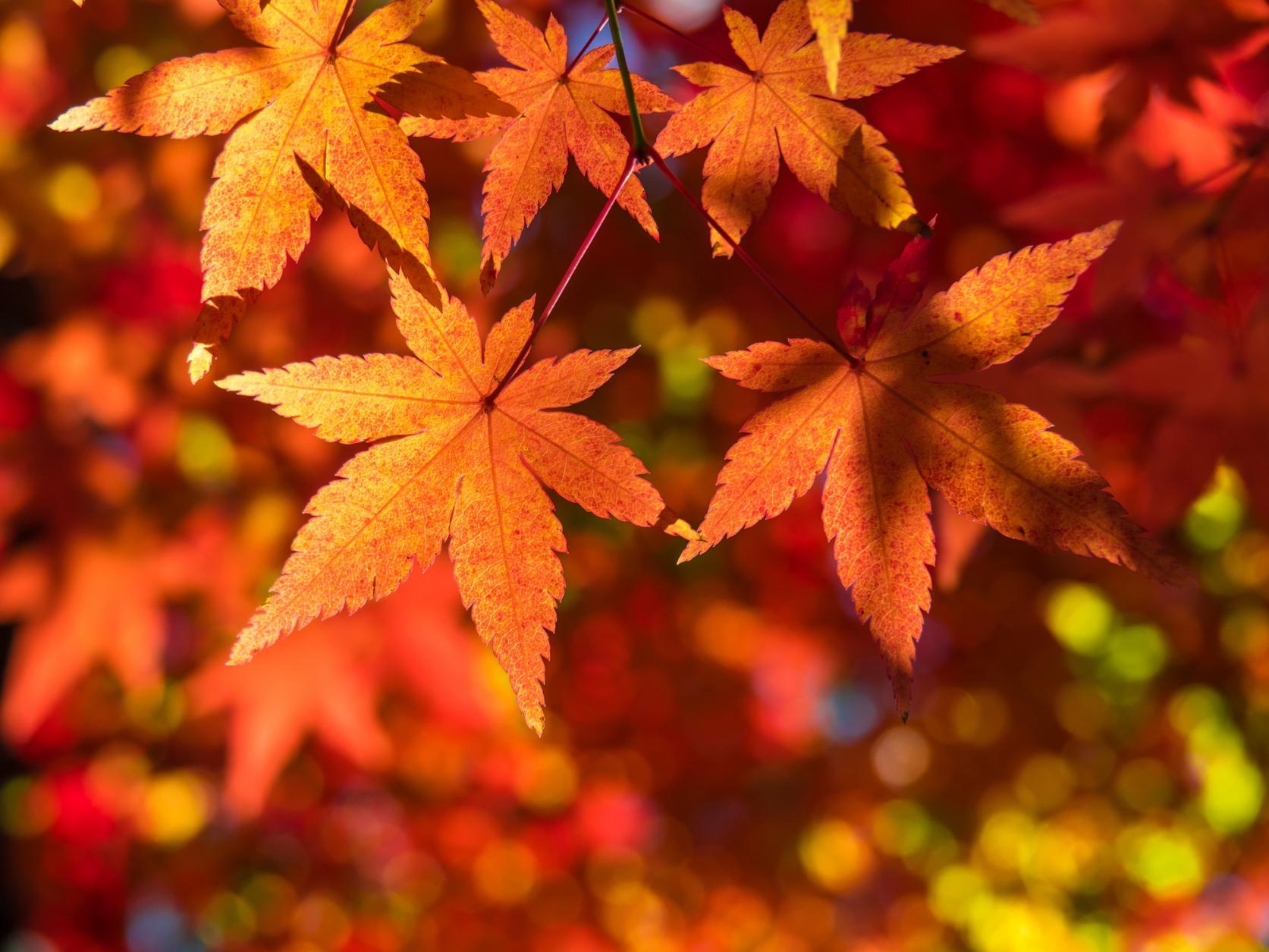 秋におすすめ